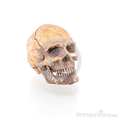 Free Human Skull On Isolated Royalty Free Stock Image - 84211206