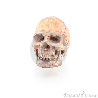 Free Human Skull On Isolated Royalty Free Stock Photo - 84211455