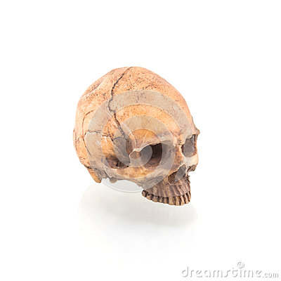 Free Human Skull On Isolated Royalty Free Stock Image - 84211536