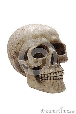 Human Skull Profile Stock Photos Image 10150993
