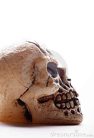 Free Human Skull Profile Royalty Free Stock Images - 23859589