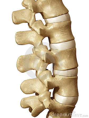 Human Spine Royalty-Free Stock Photo | CartoonDealer.com #17079015