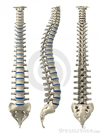 Free Human Spine Royalty Free Stock Images - 5498769