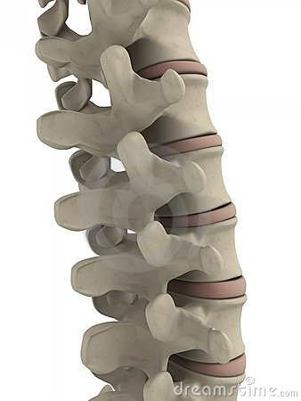 Free Human Spine Stock Photography - 5563852