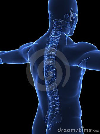 Free Human Spine X Ray Royalty Free Stock Photography - 9723957