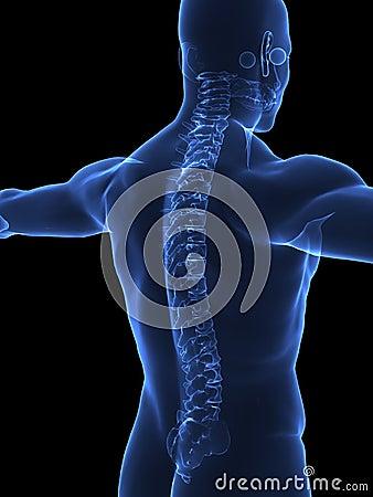 Human Spine x ray