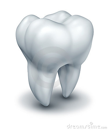 Human tooth