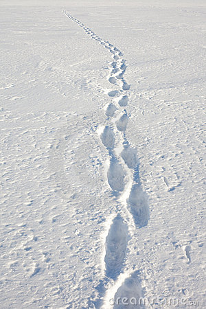 Free Human Tracks In The Snow Royalty Free Stock Images - 13679479