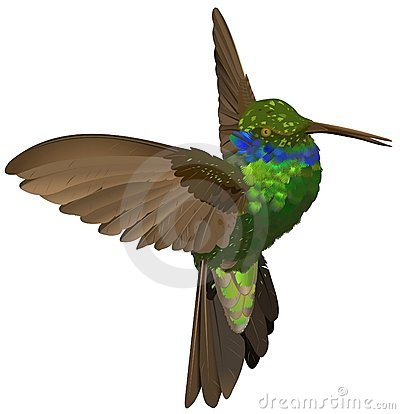Free Humming-bird Royalty Free Stock Images - 1943339