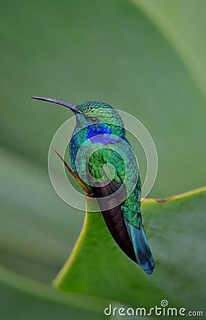 Free HUMMING BIRD Stock Photo - 35030600