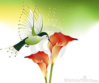 Humming bird and flowers