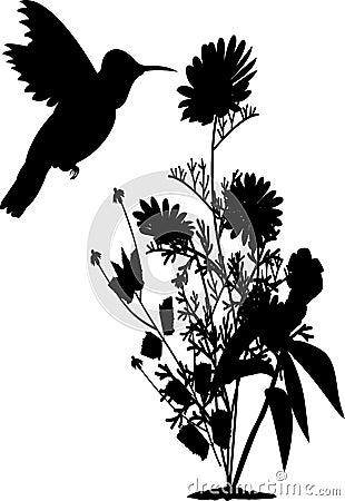 humming birds essay