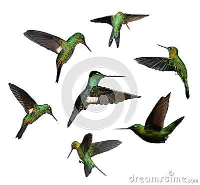 Free Humming Birds Stock Image - 1824631