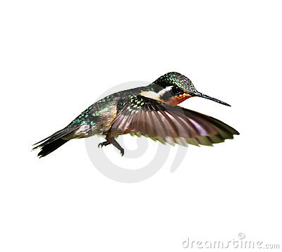 Free Hummingbird Royalty Free Stock Image - 5845206