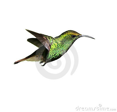 Free Hummingbird Stock Images - 5845264