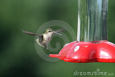 Hummingbird Approach