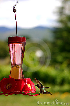 Free Hummingbird At Feeder Royalty Free Stock Photo - 181775