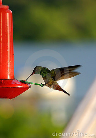 Hummingbird on a Bird Feeder