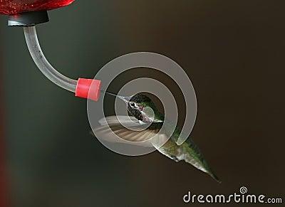 Hummingbird at feeder - 2