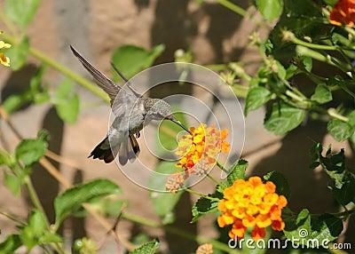 Hummingbird and flower