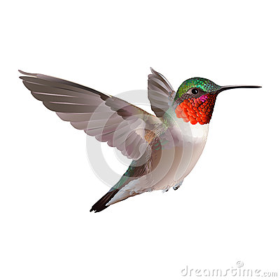 Free Hummingbird On White Background. Colubris Archilocus Stock Photo - 53015310