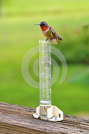 Hummingbird sitting on rain gauge