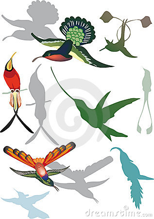 Hummingbirds collection on white