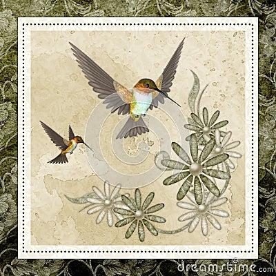 Hummingbirds & Design Background