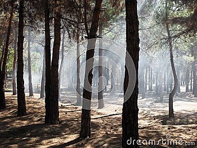 Humo en bosque