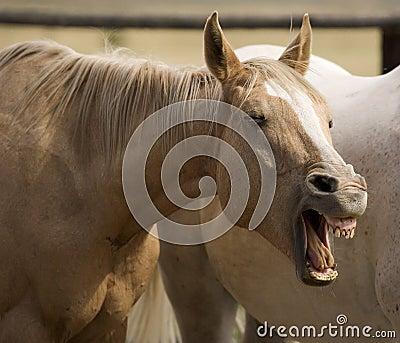 Humorous Horse