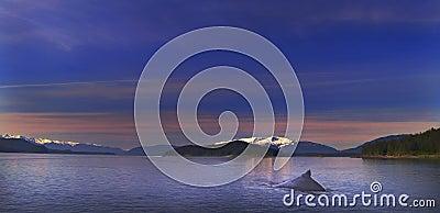 Humpback Solitude