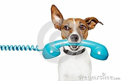 Hund auf dem Telefon und dem schauen Th die Seite