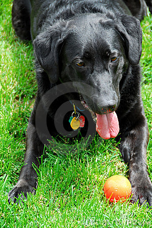 Hund mit einer Kugel