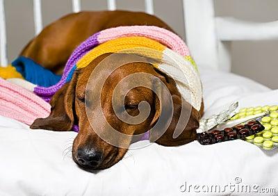Hund och drog