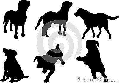 Hund silhouettiert Ansammlung
