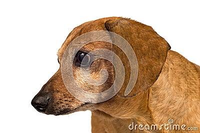 Hund som ser upp slut åt sidan