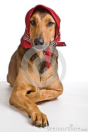 Hund, wie Wolf als Rotkäppchen verkleidete