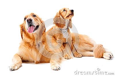 Hundar två