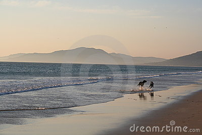 Hunde, die auf den Strand laufen