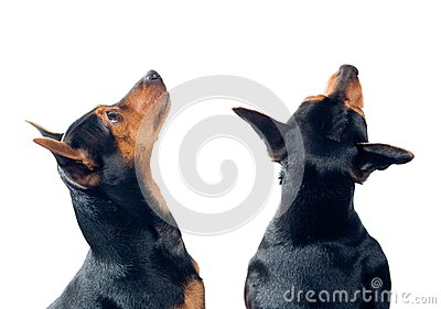 Hunde, die oben schauen