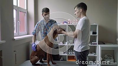 Hunden sitter på en tabell i en veterinär- klinik