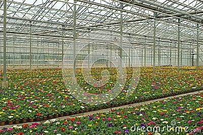 Hundreds of flowers growing in nursery