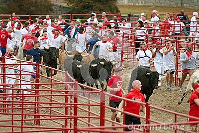 Hundreds Run With The Bulls At Georgia Event Editorial Photography
