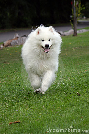 Hundrunning