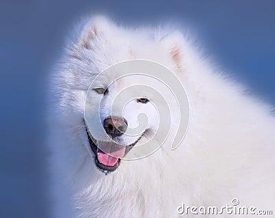 Hundsamoyed