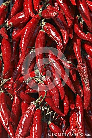 Hungarian red hot pepper