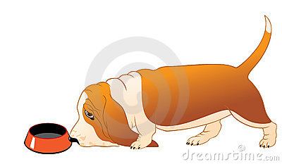 Hungry Basset Hound