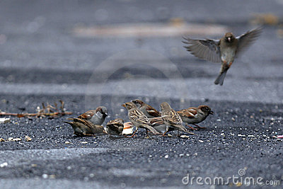 Hungry Birds Stock Photo - Image: 1754440