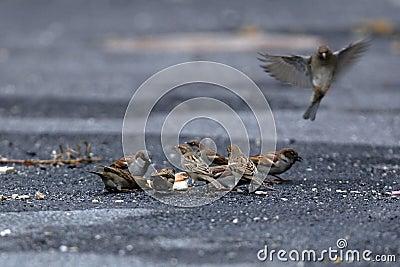Hungry Birds