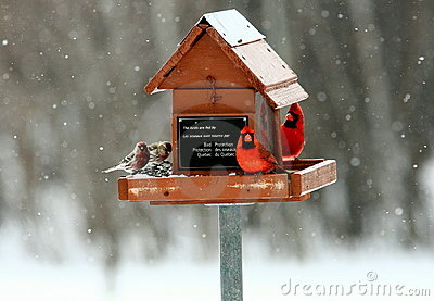 Hungry birds at feeder in winter